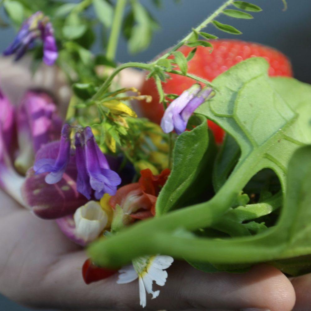 Flores e legumes (Largo)