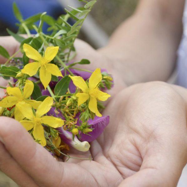 flores mãos